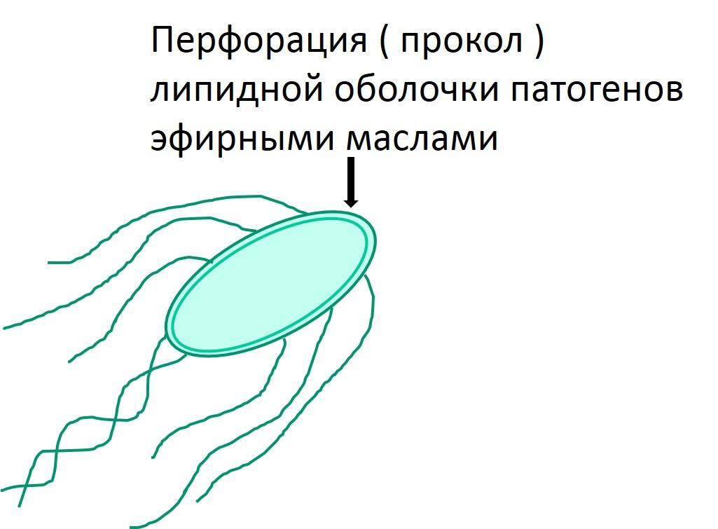 calferol2
