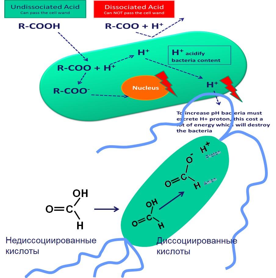 aquaacid2